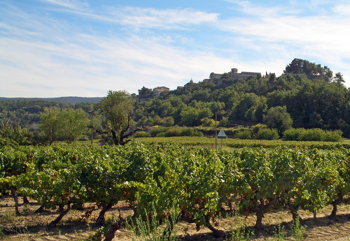vineyard-in-provence